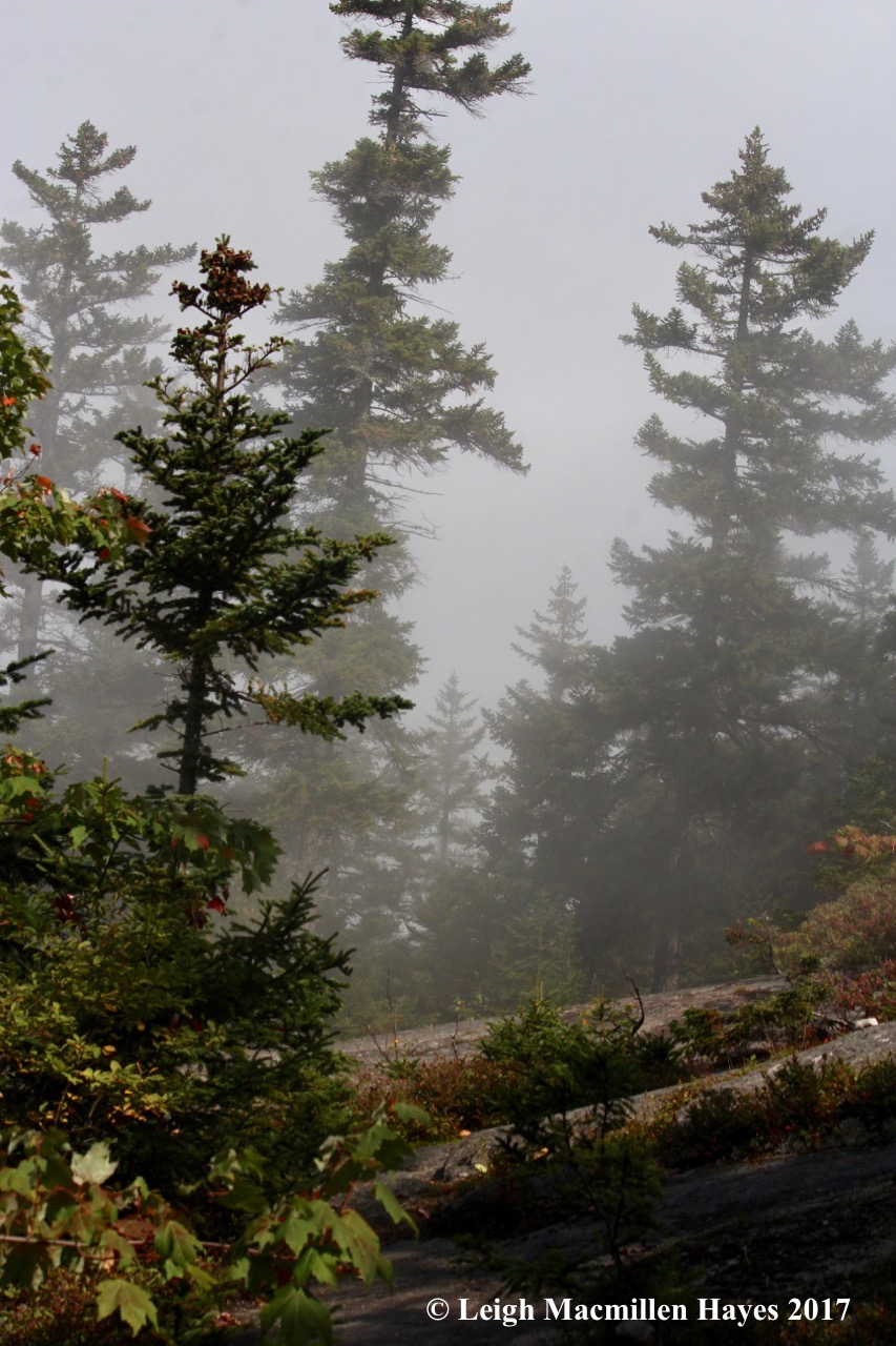 p21-fog 1 view