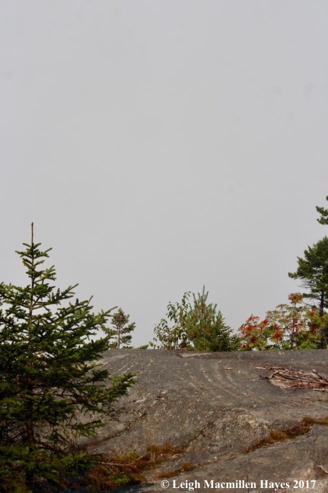 p22-fog 2 view