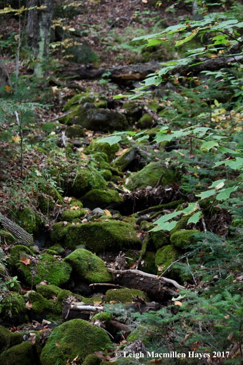 p3-dry brook
