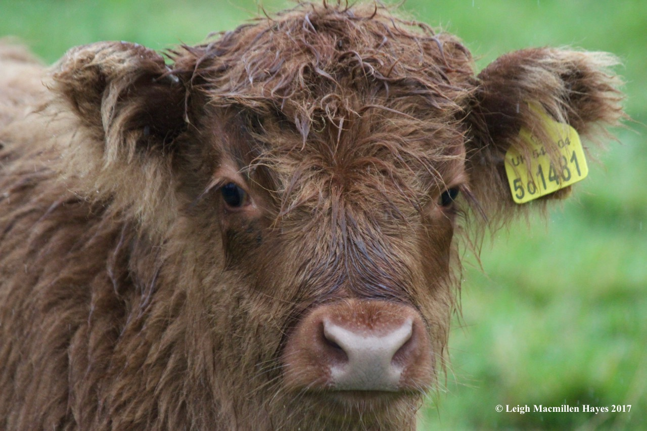s-cow 3, Sept 3 blog
