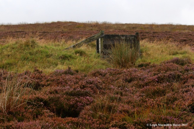 s-grouse blind, Sept 5