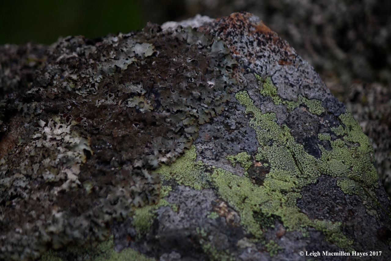 s-lichen