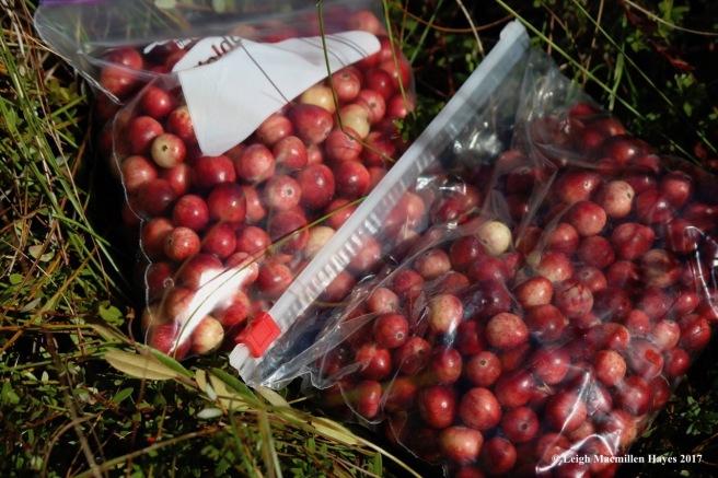 f6-cranberries