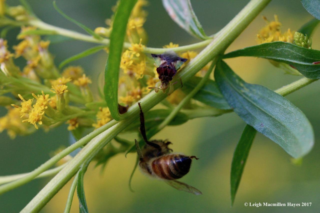 i-ambush and bee 2