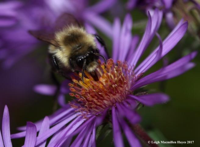 i3-bumblebee face