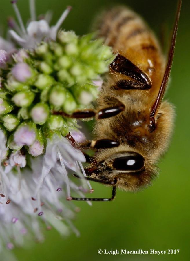 i5-honeybee 2