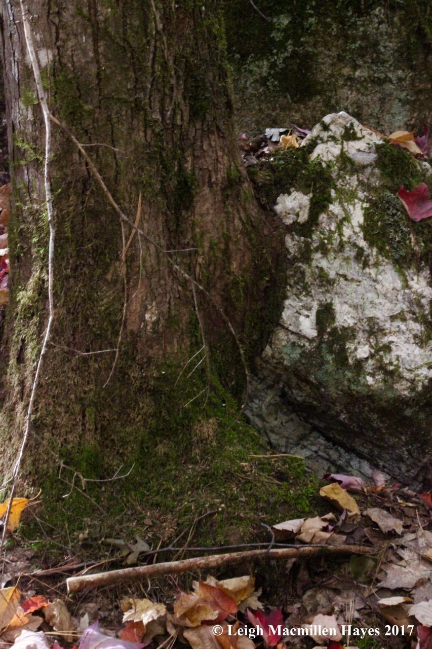 k-hemlock and boulder 2