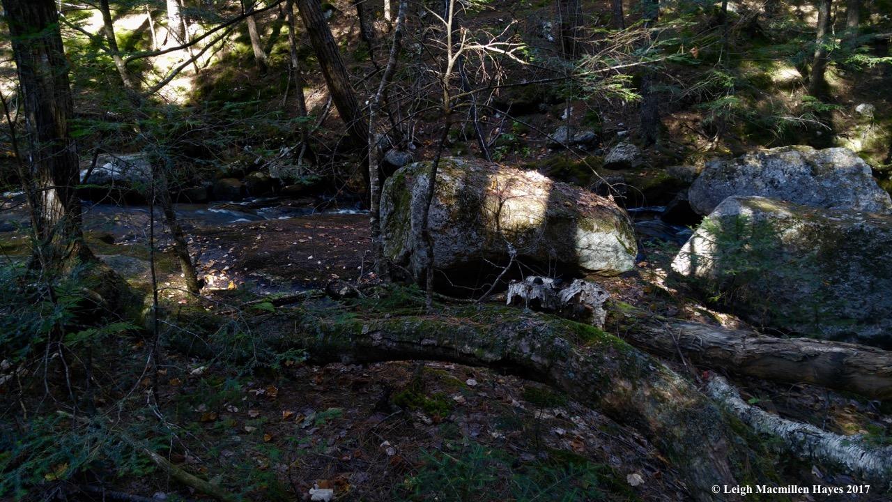 k-Province Brook hemlock root