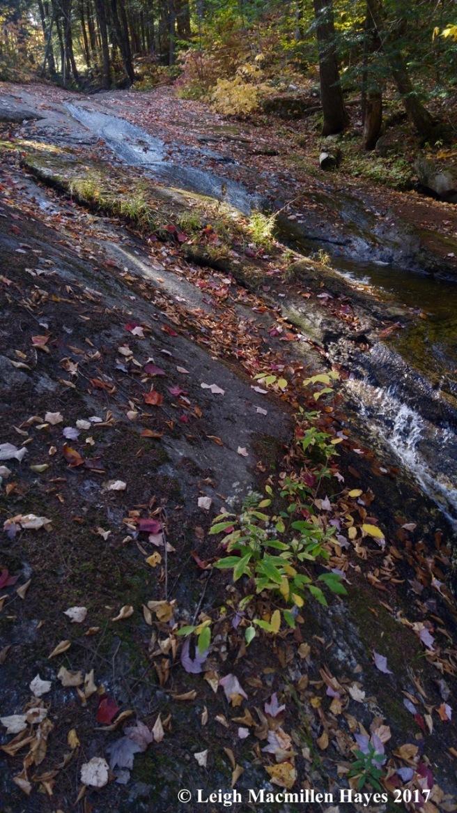 m-Weeks brook flowing 1