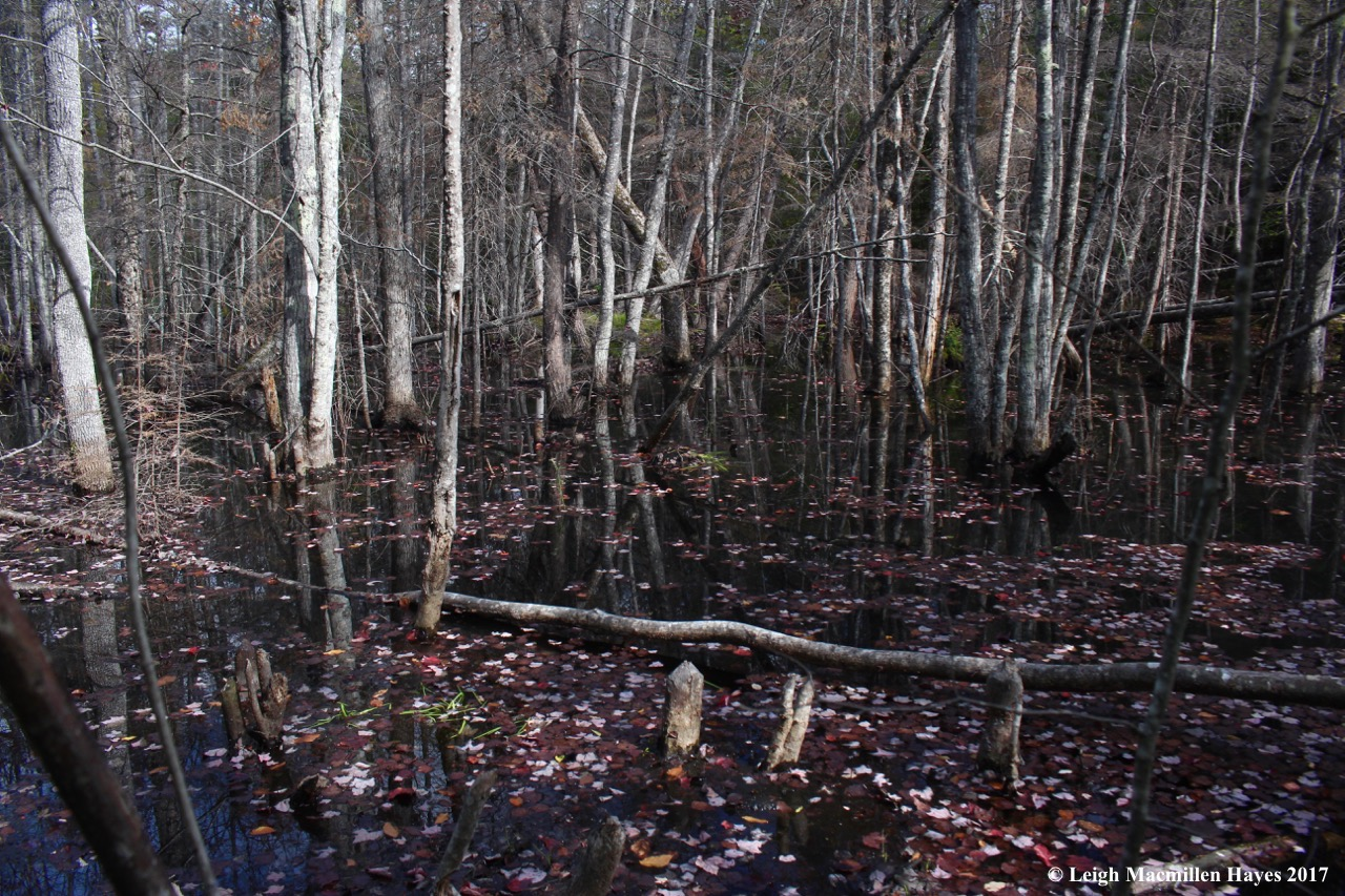 m14-beaver pond of yore