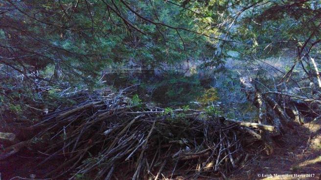 s-beaver dam 2 (1)
