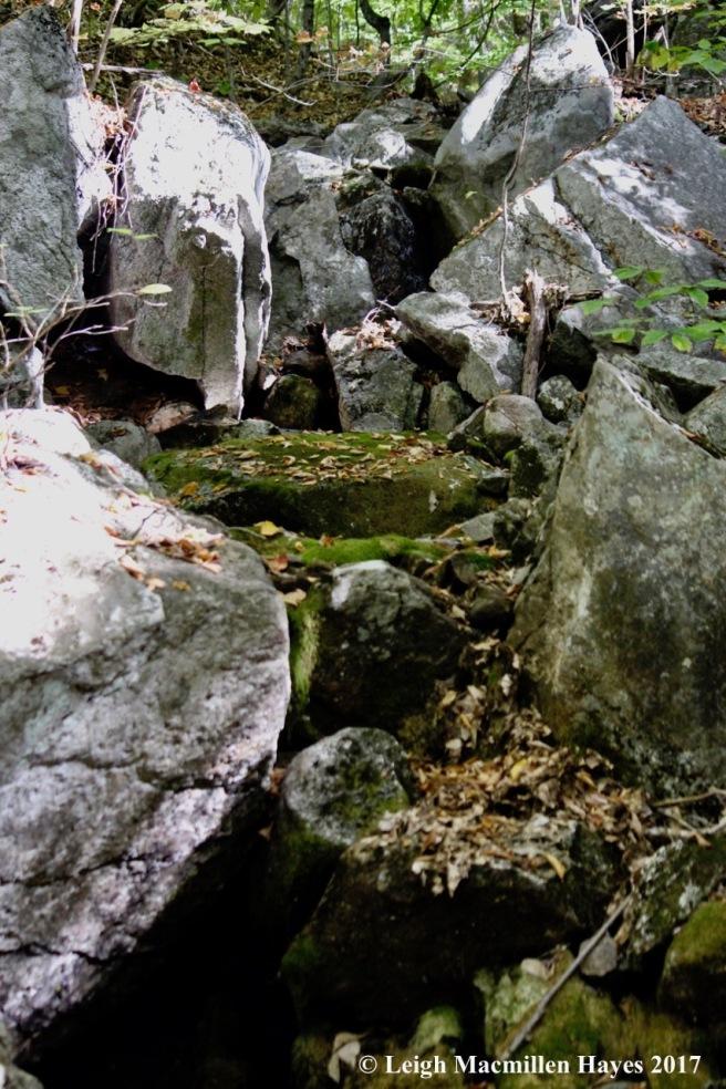 s-dry brook1
