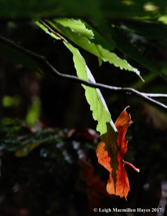 s-leaf art