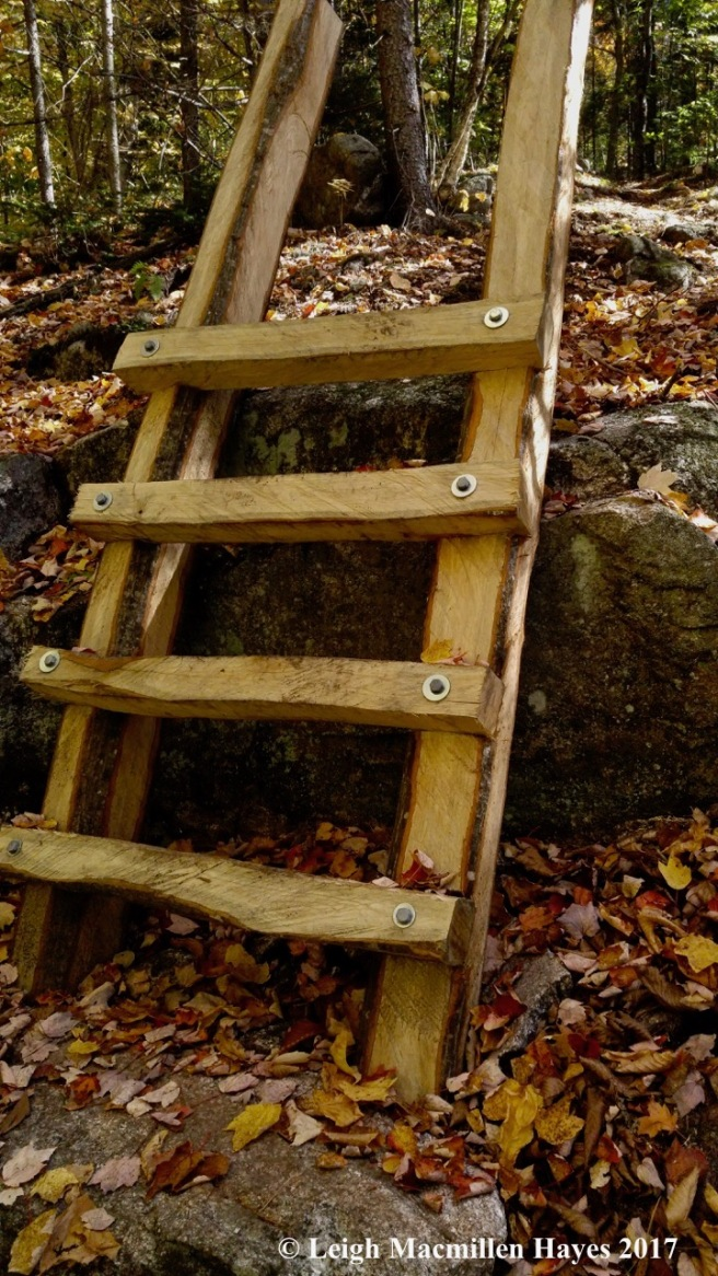 s-oak ladder (1)