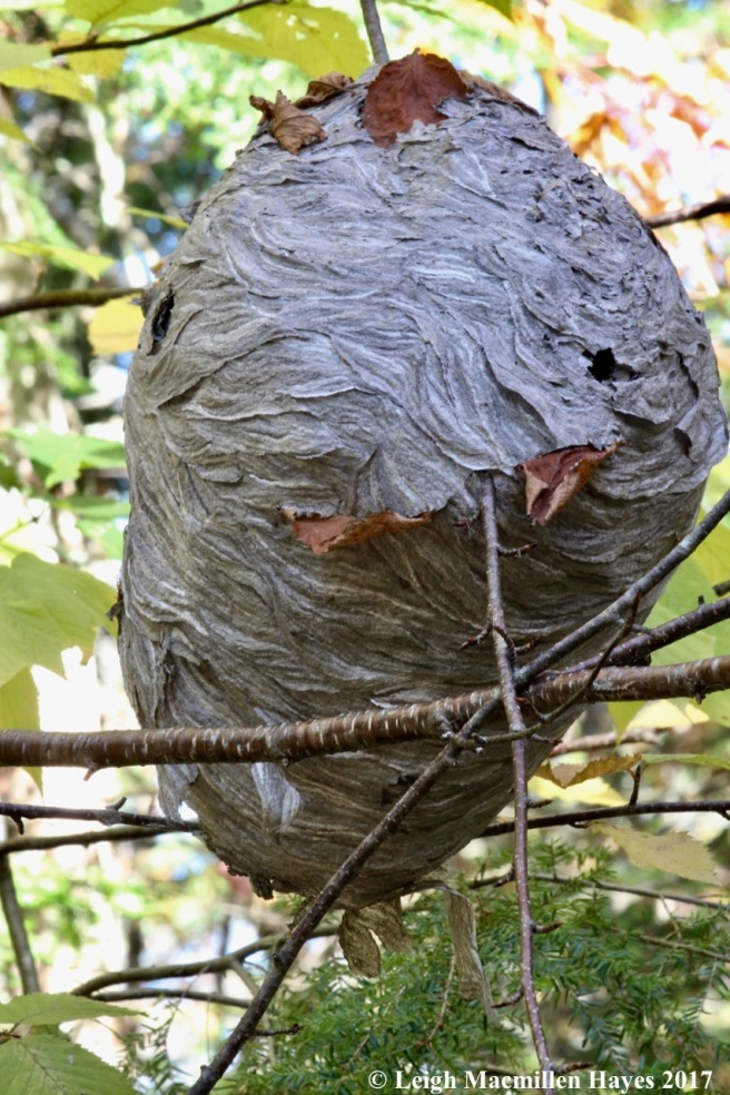 s-wasp nest
