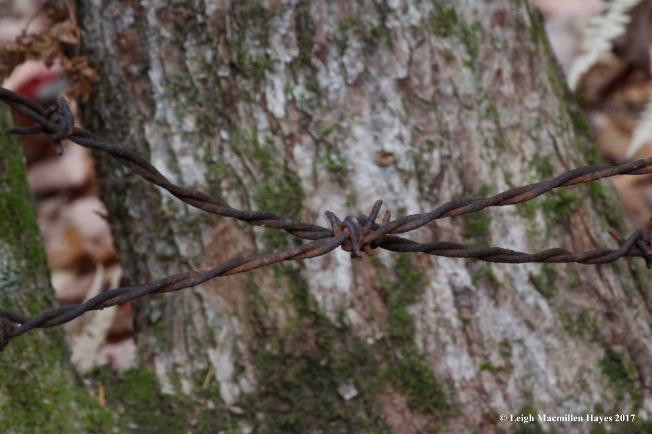 s9-barbed wire