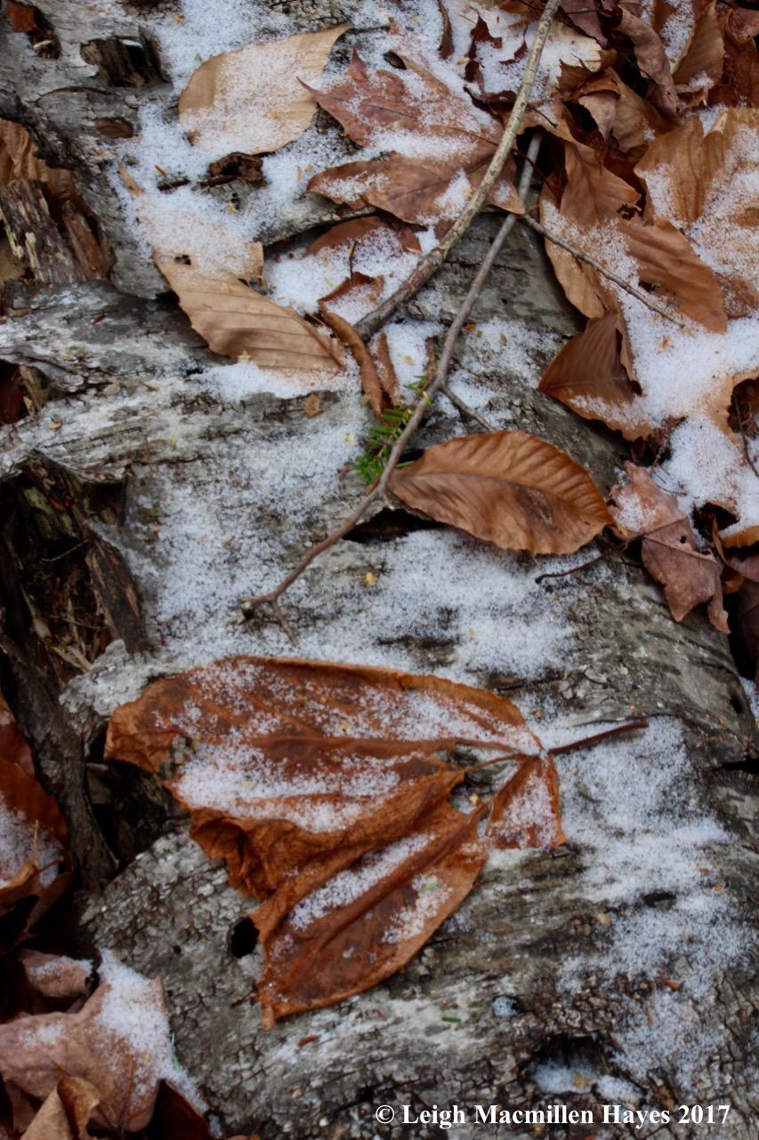 a10-SNOW