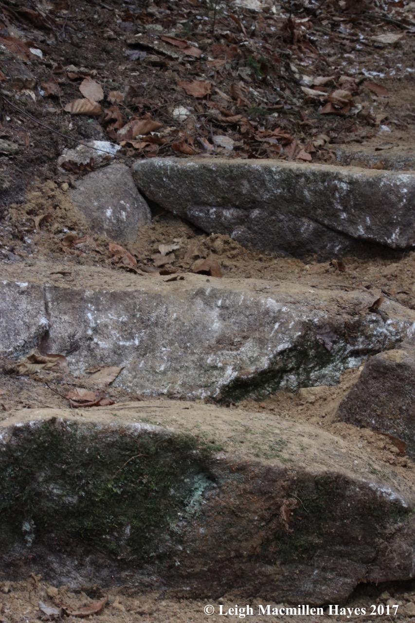 a12-new steps