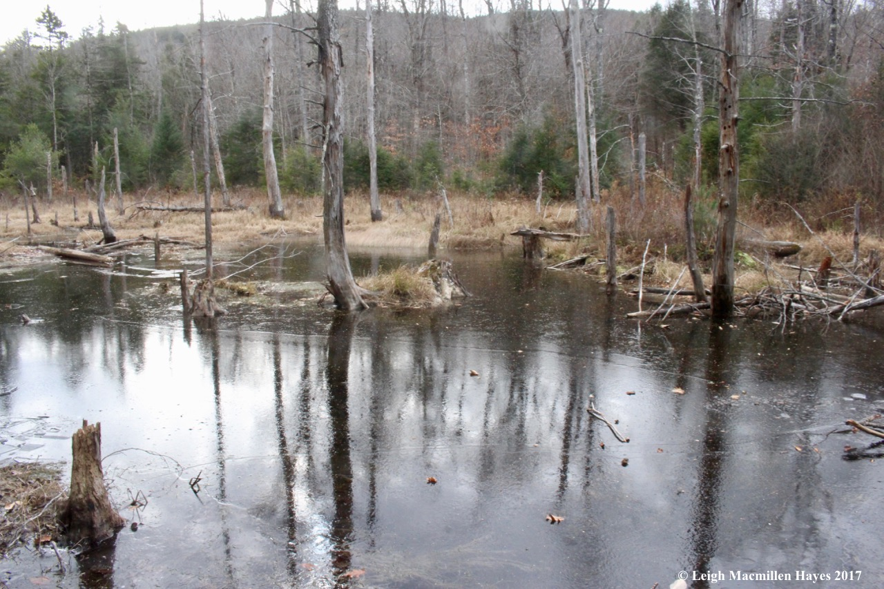 a2-ice on beaver pond