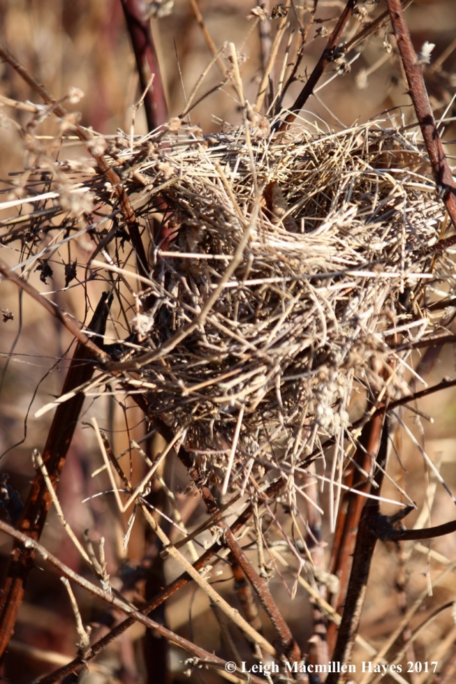 b27-bird nest