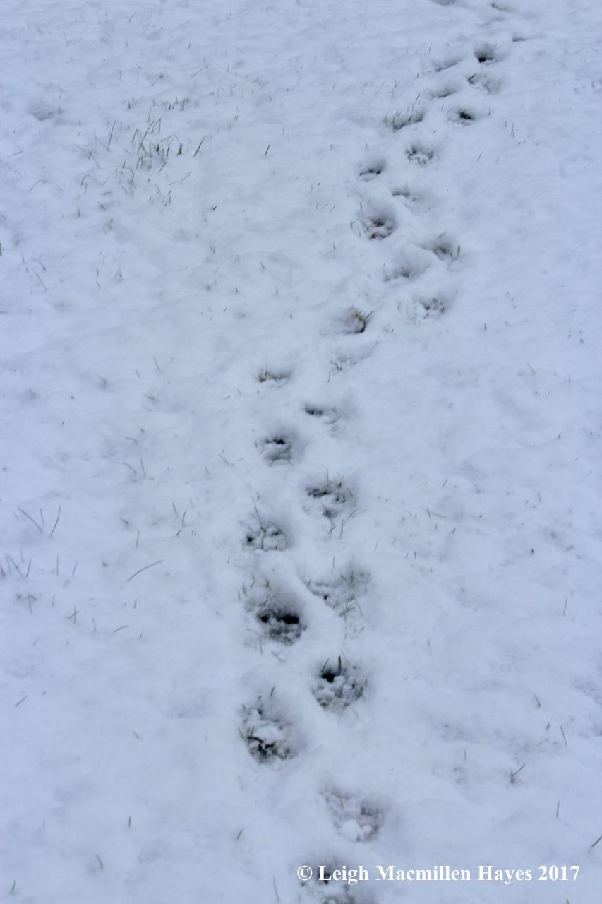 m-porcupine trail 1