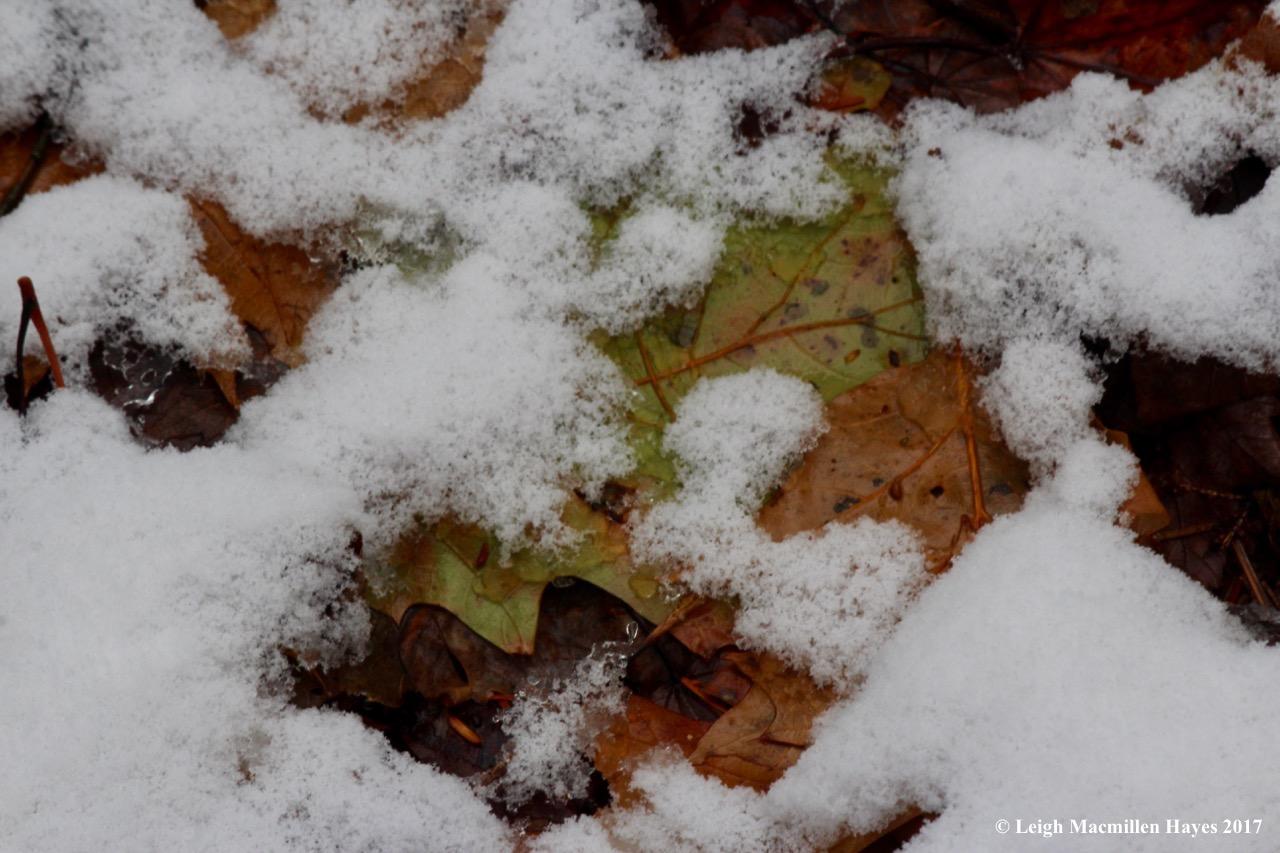 m-snow art 2