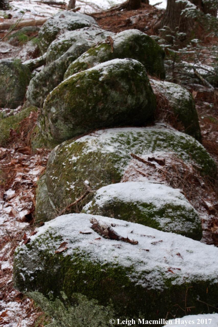m-squirrel rocks