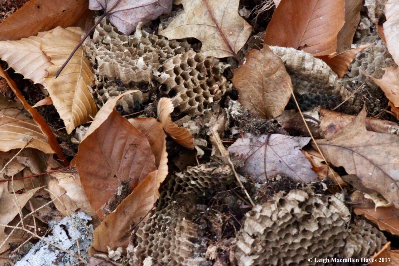 m8-bees nest 1