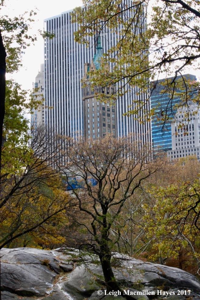 n-Central Park 1