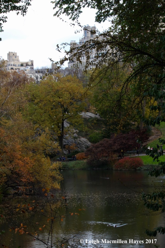 n-Central Park meets autumn