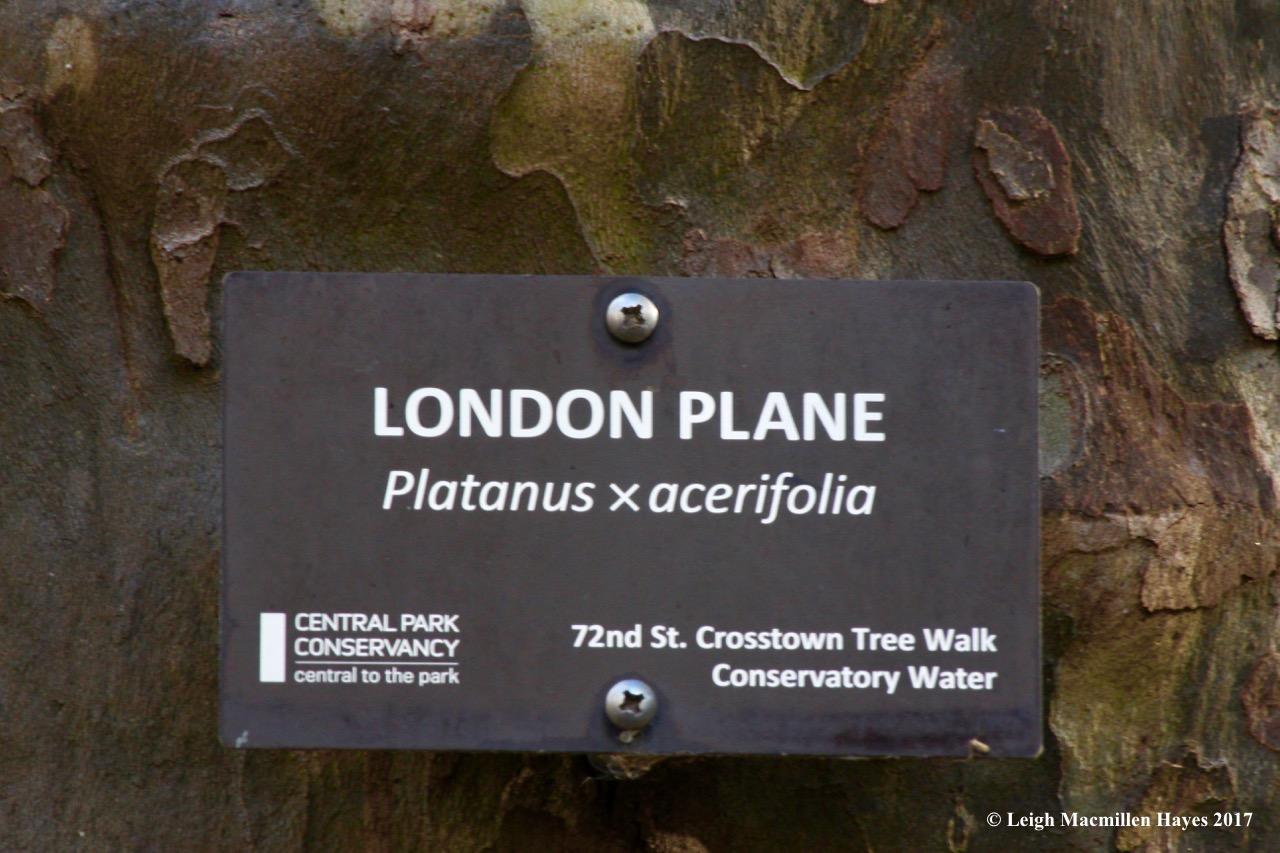 n-London Plane