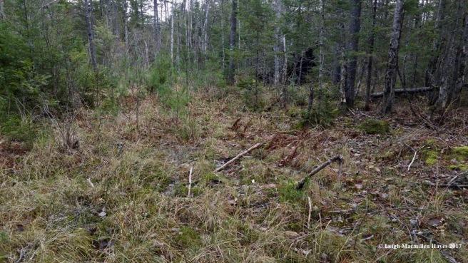 o-varied habitat 1