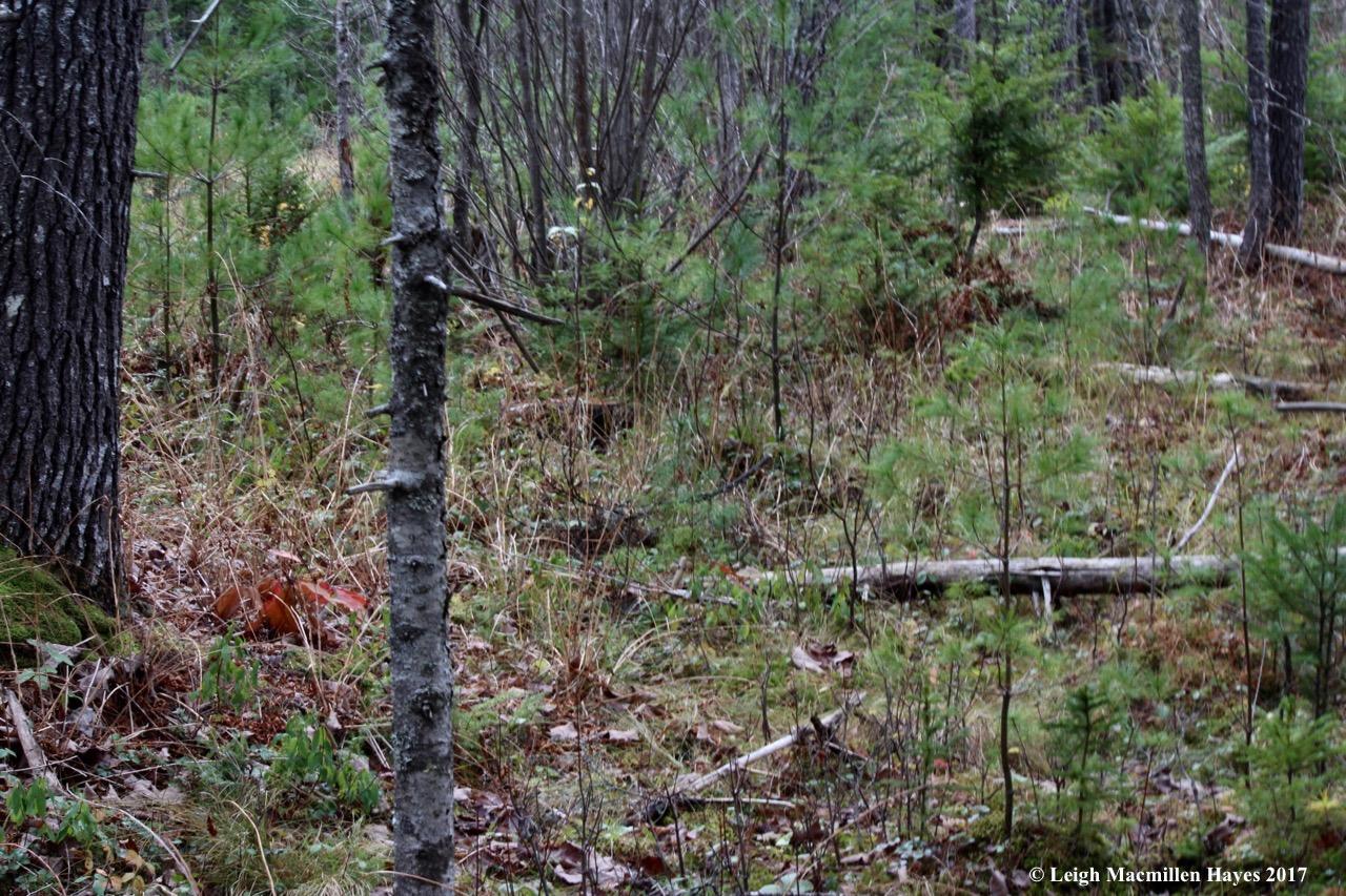 o-varied habitat 6