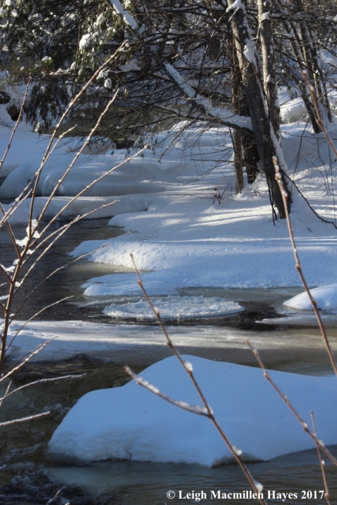 c5b-ice disk in Stevens Brook