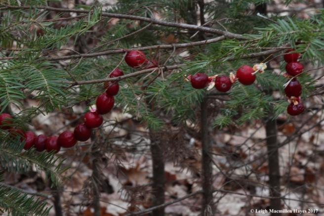 f-cranberries
