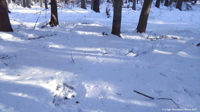 o-deer beds 2