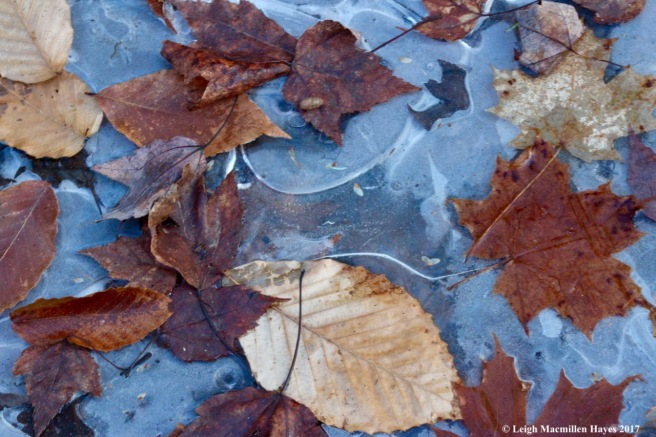 o-ice art 1
