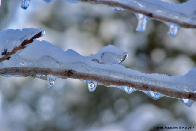 o-ice drips