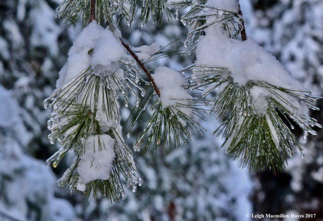 o-ice on pine finale