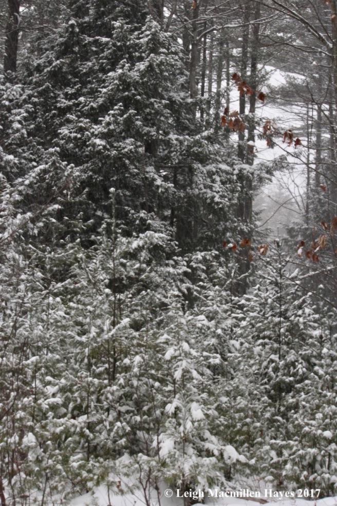 s-snow!