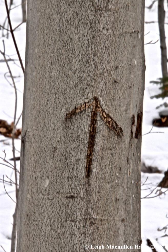 b16-arrow