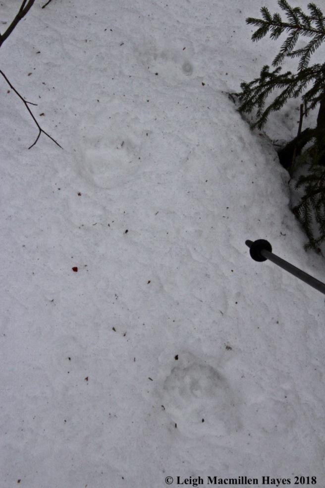 b24-bear tracks