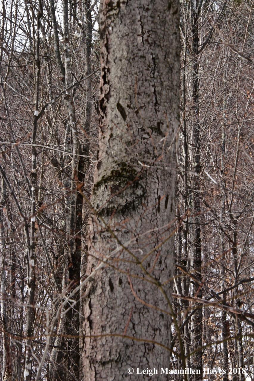 b28-bear trees
