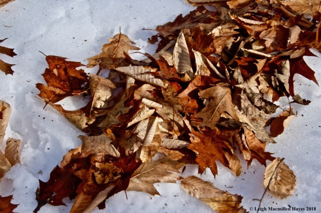 b3-oak and beech leaves