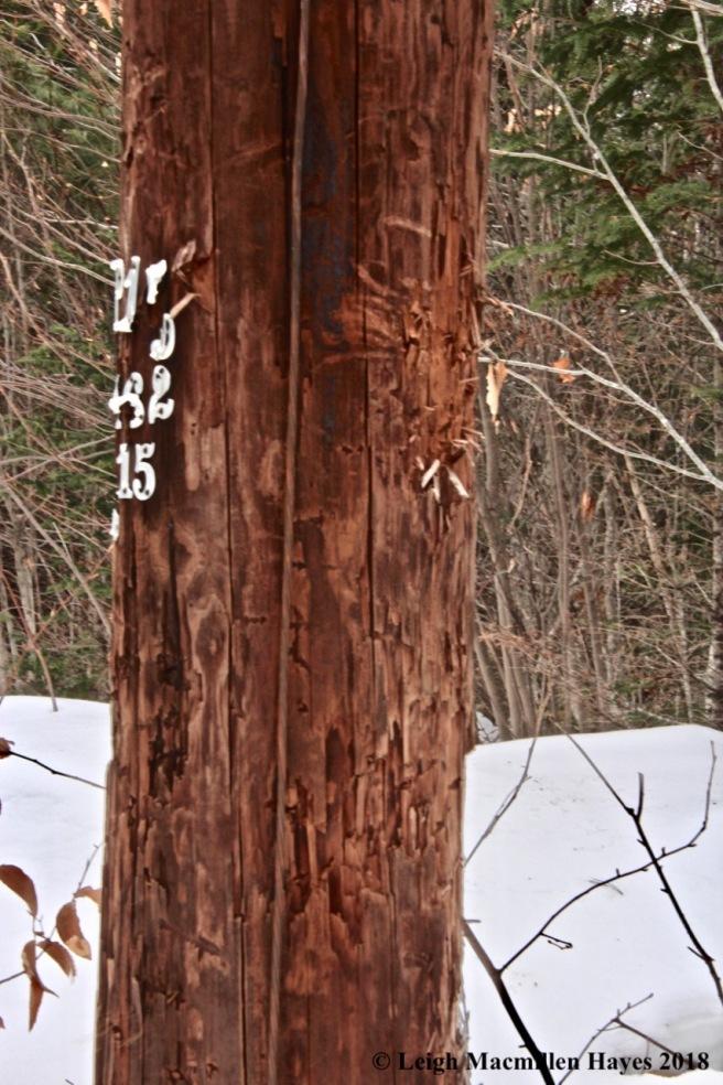 b5-Pole #15