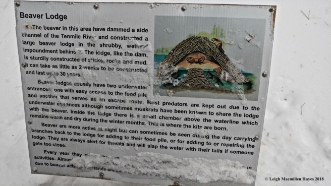 d-beaver lodge signage