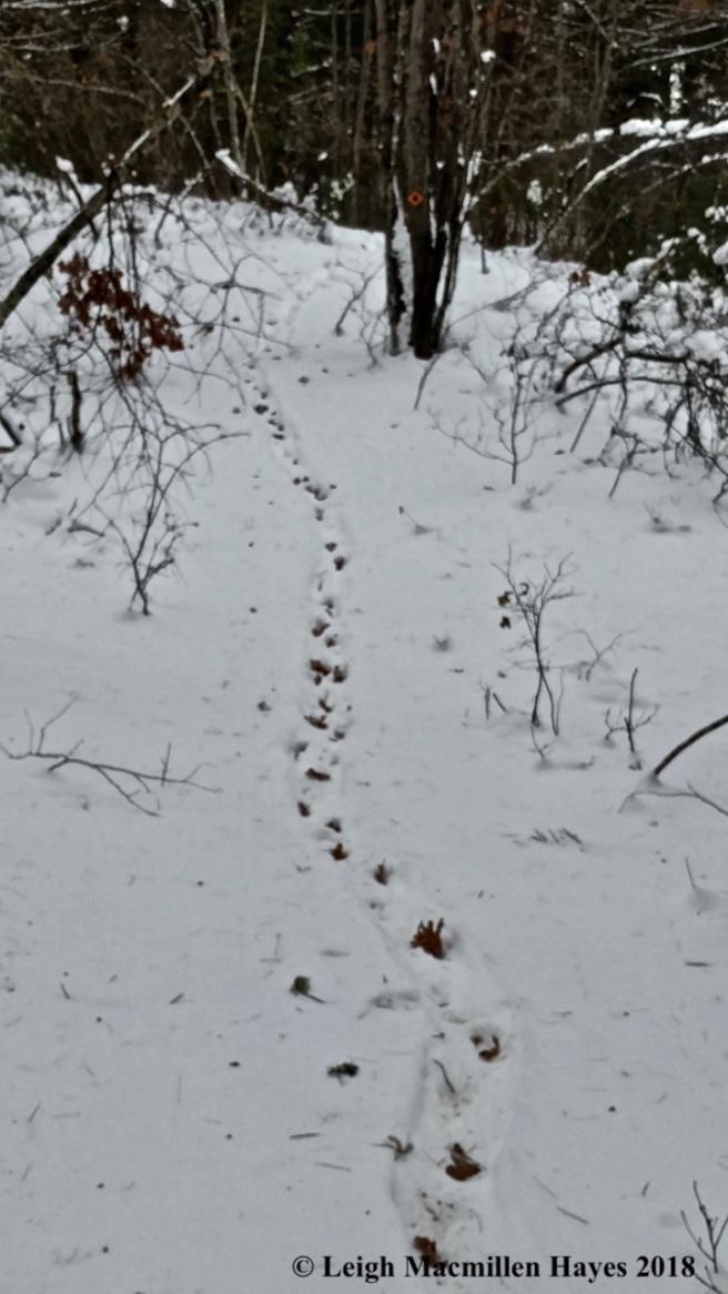 d-porky trail