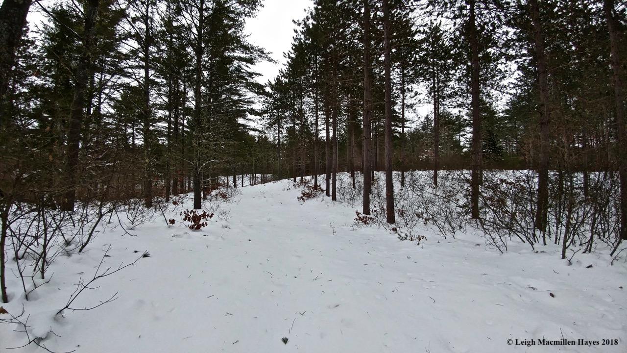 d-wetland trail