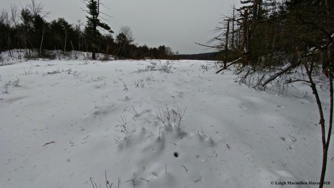 d-wetland view 1