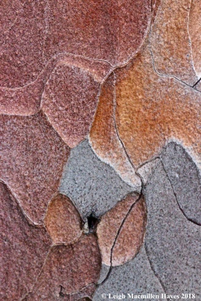 e-red pine bark